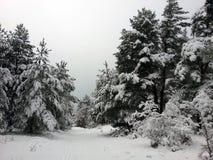 Invierno del bosque Mucha nieve Imagen de archivo
