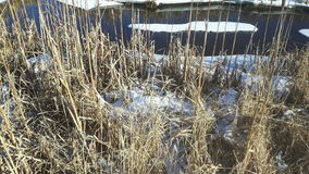 Invierno del canadiense del pantano del agua salada Imagen de archivo libre de regalías