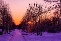 invierno del sol de la naturaleza de la oscuridad de la puesta del sol Fotos de archivo