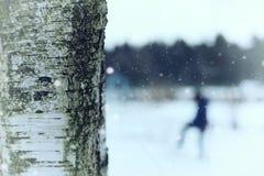 Invierno del tronco de árbol de abedul Fotografía de archivo