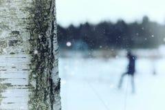 Invierno del tronco de árbol de abedul Imagenes de archivo