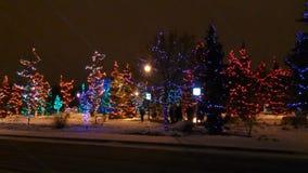 Invierno en arboleda Spruce Fotos de archivo