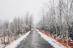 Invierno en Biei, Hokkaido, Japón Imagenes de archivo