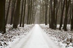 Invierno en bosque Imágenes de archivo libres de regalías