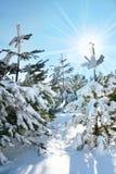 Invierno en bosque Foto de archivo