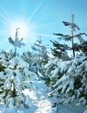 Invierno en bosque Imagen de archivo libre de regalías