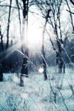 Invierno en bosque Imagenes de archivo