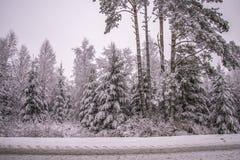 Invierno en bosques noruegos Imagen de archivo libre de regalías