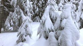Invierno en el abeto de las montañas cubierto por la nieve almacen de video