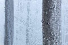 Invierno en el bosque, árboles con escarcha Paisaje azul y blanco del bosque del PF del detalle de la nieve del invierno en árbol fotos de archivo