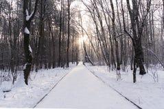 Invierno en el bosque fotografía de archivo