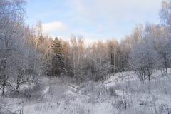 Invierno en el bosque foto de archivo libre de regalías