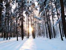 Invierno en el bosque Foto de archivo