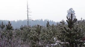 Invierno en el bosque Fotografía de archivo libre de regalías