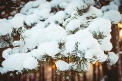 Invierno en el bosque fotos de archivo libres de regalías