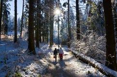 Invierno en el bosque, con nieve en los árboles Foto de archivo libre de regalías