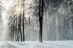 Invierno en el bosque con polvo de la nieve en los caminos en Rusia, Sibe Fotos de archivo