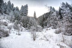 Invierno en el bosque de la montaña imágenes de archivo libres de regalías