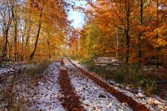 Invierno en el camino en el bosque fotografía de archivo libre de regalías