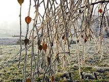 Invierno en el campo croata, detalles, 2 Foto de archivo