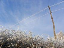 Invierno en el campo croata, detalles, 4 Fotos de archivo libres de regalías