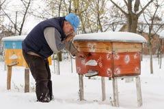 Invierno en el colmenar El invierno del apicultor supervisa la situación de abejas en la colmena Abejas del invierno en las colme Imagen de archivo