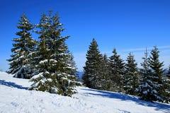 Invierno en el Feldberg en el bosque negro Foto de archivo libre de regalías