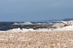 Invierno en el lago Foto de archivo libre de regalías