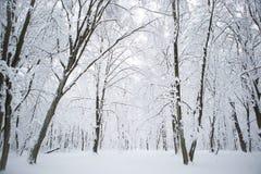 Invierno en el más forrest Foto de archivo libre de regalías