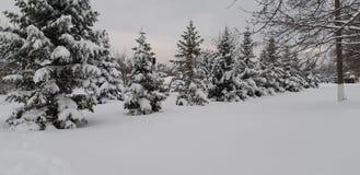 Invierno en el Moldavia foto de archivo libre de regalías