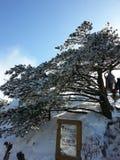 Invierno en el Mt China de huang fotografía de archivo libre de regalías