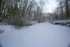 Invierno en el paisaje de enero del bosque Fotografía de archivo