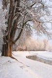 Invierno en el parque Fotos de archivo libres de regalías