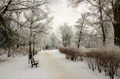 Invierno en el parque Imagen de archivo libre de regalías