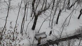 Invierno en el parque snowing almacen de video