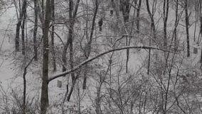 Invierno en el parque snowing metrajes