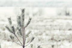 Invierno en el pueblo Fotografía de archivo