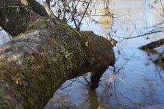 Invierno en el Waipa Imagenes de archivo