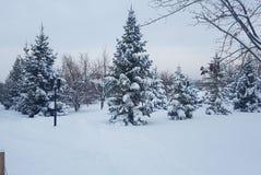 Invierno en enero imágenes de archivo libres de regalías