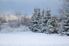 Invierno en Estonia Foto de archivo