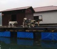 Invierno en la bahía de Halong, Vietnam, Asia Fotografía de archivo
