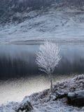 Invierno en la cañada Garry, Escocia fotografía de archivo libre de regalías