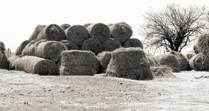 Invierno en la granja en el noroeste, Suráfrica fotos de archivo libres de regalías