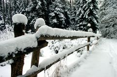Invierno en la madera Fotografía de archivo libre de regalías