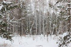 Invierno en la madera Foto de archivo libre de regalías