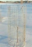 Invierno en la yarda. Imagen de archivo