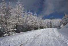Invierno en las maderas Foto de archivo libre de regalías
