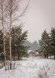 Invierno en las maderas Fotografía de archivo