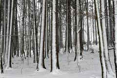 Invierno en las maderas Fotos de archivo