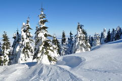 Invierno en las montañas cárpatas Fotos de archivo libres de regalías
